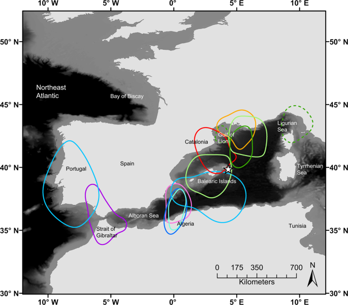 Patterns of at-sea behaviour at a hybrid zone between two threatened s