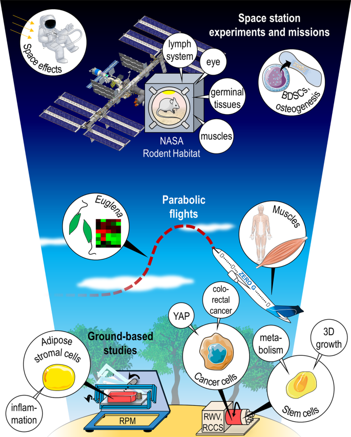 Guest Edited Collection Gravitational Biology And Space Medicine Scientific Reports
