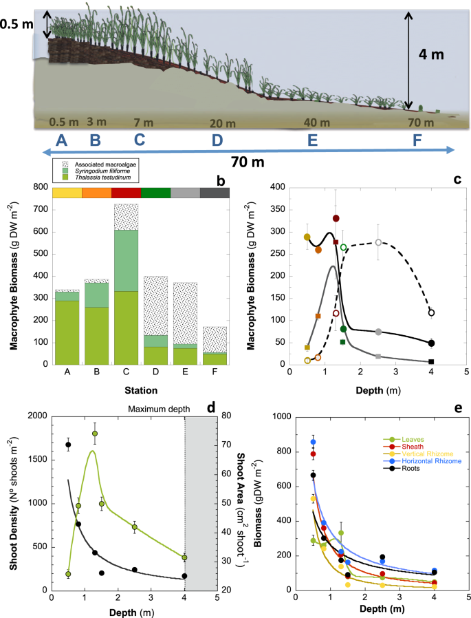 Structural complexity governs seagrass acclimatization to depth with r