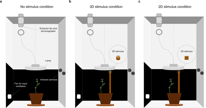 Flexible control of movement in plants