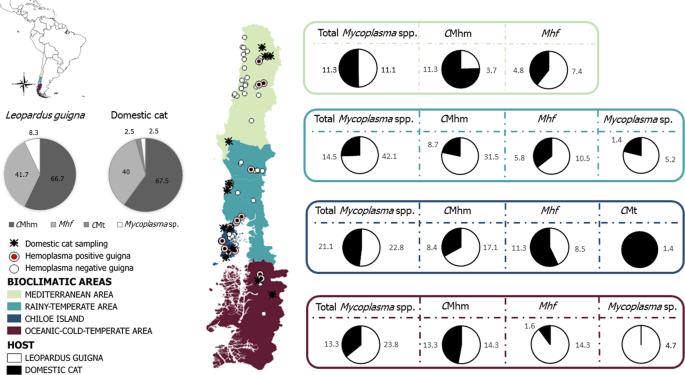 Assessing cross-species transmission of hemoplasmas at the wild-domest