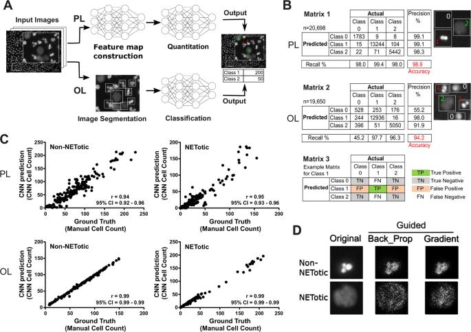 Machine Learning to Quantitate Neutrophil NETosis