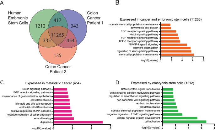 Fgf Signalling In The Self Renewal Of Colon Cancer Organoids Scientific Reports