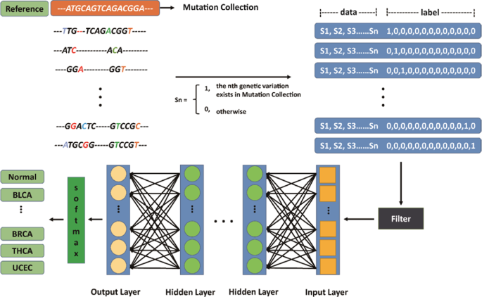 Identification of 12 cancer types through genome deep learning