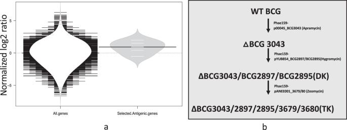 Development of a diagnostic compatible BCG vaccine against Bovine tube