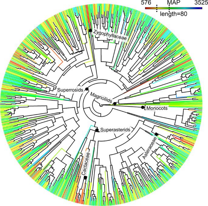 Evolutionary diversity in tropical tree communities peaks at intermedi