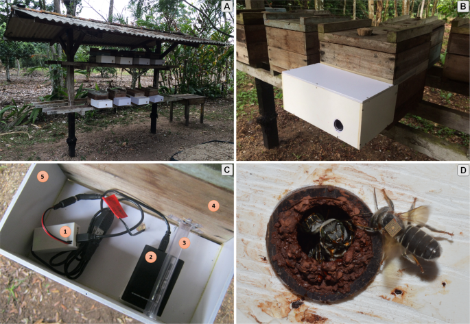 An Amazon stingless bee foraging activity predicted using recurrent ar