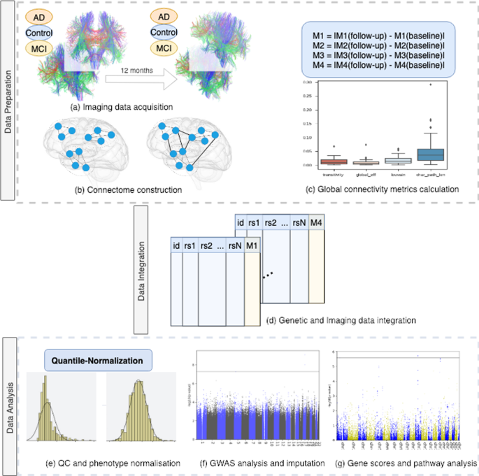 Genome-Wide Association Study of Brain Connectivity Changes for Alzhei