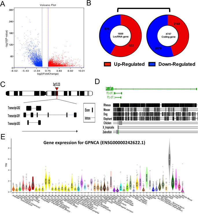Upregulation Of Gpnca Is Associated With Poor Prognosis Through Enhancement Of Tumor Growth Via Regulating Gsk3b Scientific Reports