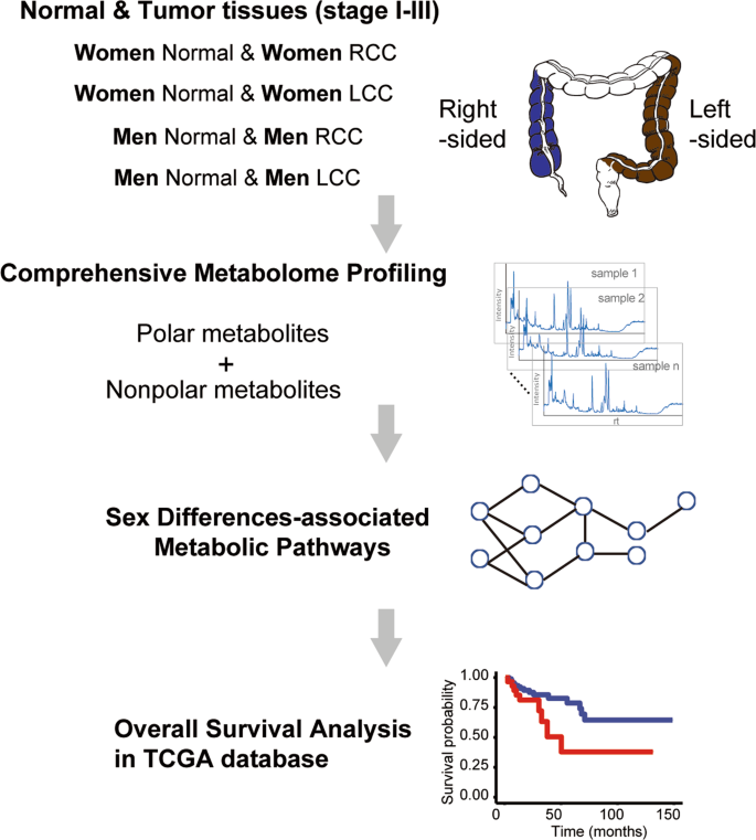 Sex Differences In Colon Cancer Metabolism Reveal A Novel Subphenotype Scientific Reports