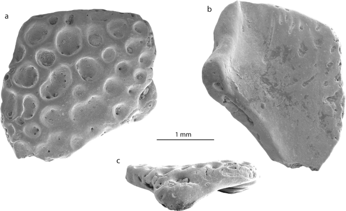 First fossil frog from Antarctica: implications for Eocene high ...