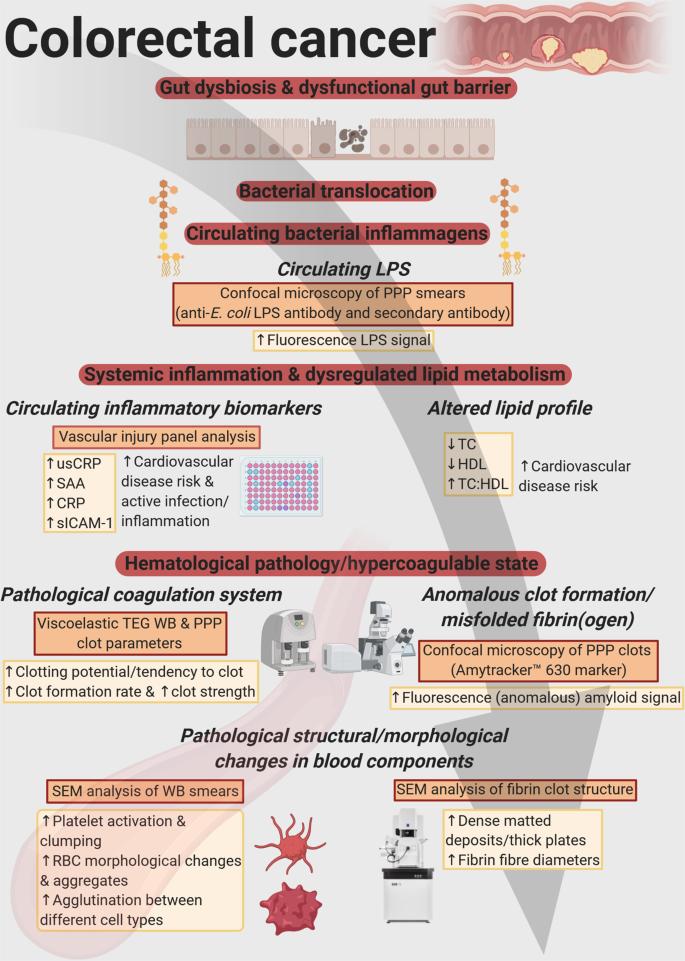 Colorectal Cancer Is Associated With Increased Circulating Lipopolysaccharide Inflammation And Hypercoagulability Scientific Reports