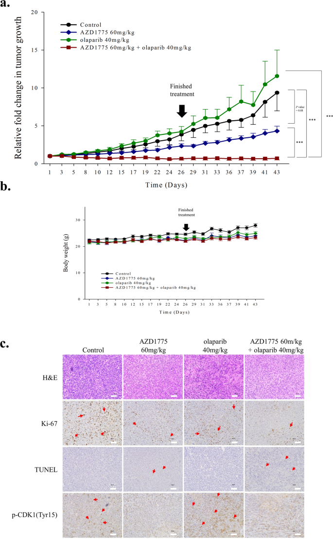 Antitumor Effect Of A Wee1 Inhibitor And Potentiation Of Olaparib Sensitivity By Dna Damage Response Modulation In Triple Negative Breast Cancer Scientific Reports