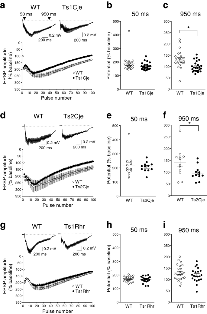 Impairment Of Spatial Memory Accuracy Improved By Cbr1 Copy Number Resumption And Gaba B Receptor Dependent Enhancement Of Synaptic Inhibition In Down Syndrome Model Mice Scientific Reports
