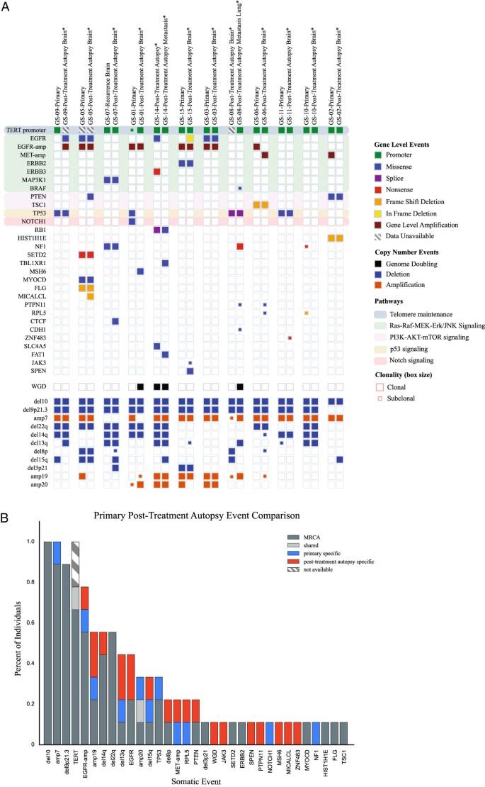 Resolving the phylogenetic origin of glioblastoma via