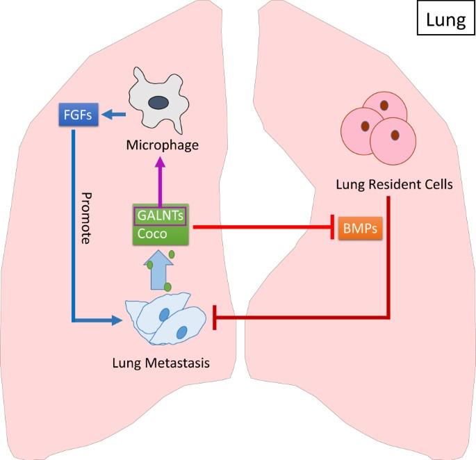 Organotropism: new insights into molecular mechanisms of breast