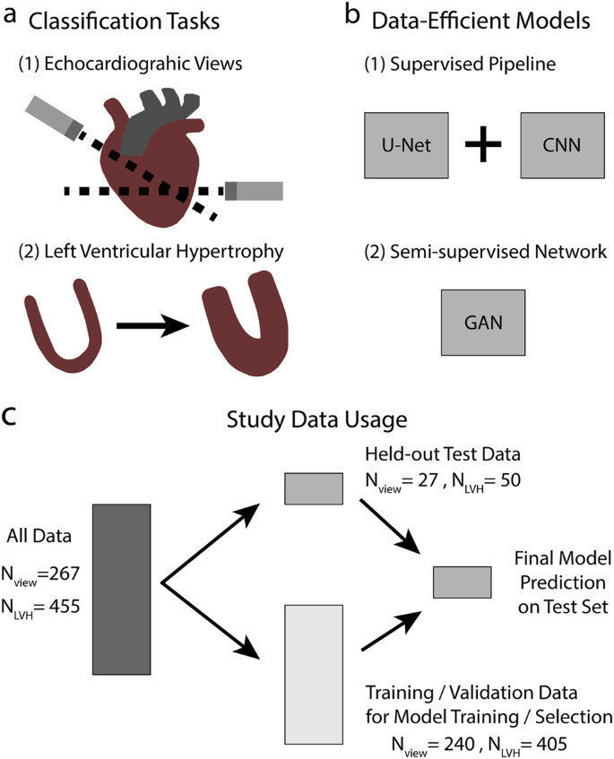 Deep echocardiography: data-efficient supervised and semi-supervised