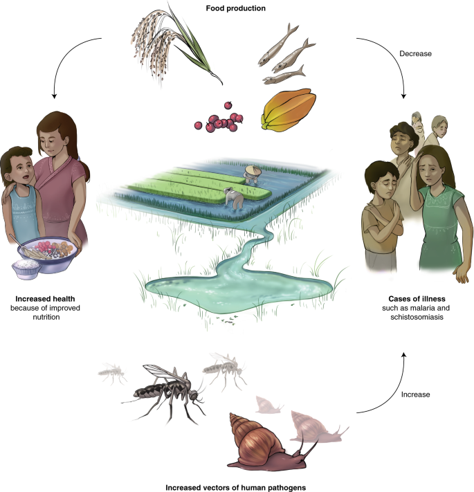 Emerging human infectious diseases and the links to global