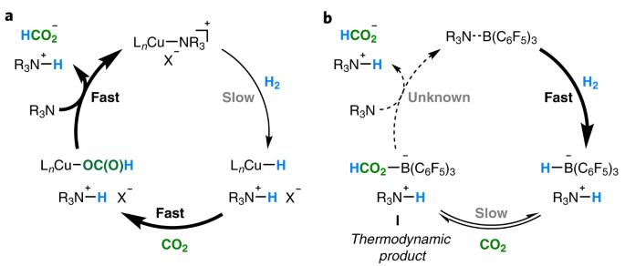 Tandem copper hydride–Lewis pair catalysed reduction of