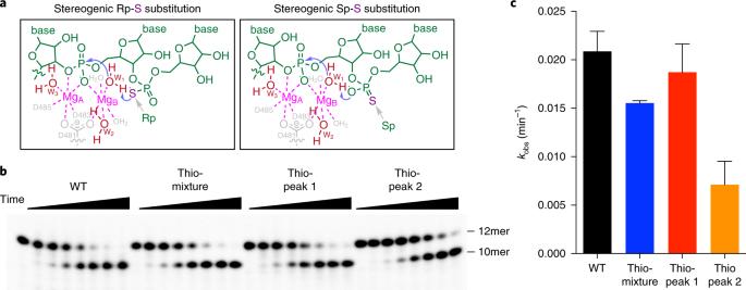 Intrinsic cleavage of RNA polymerase II adopts a nucleobase