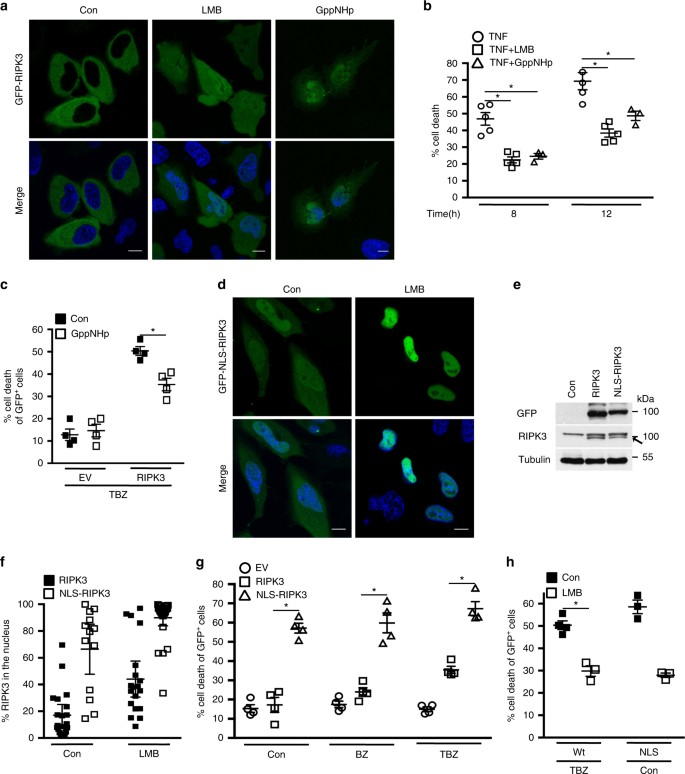 Nuclear RIPK3 and MLKL contribute to cytosolic necrosome formation