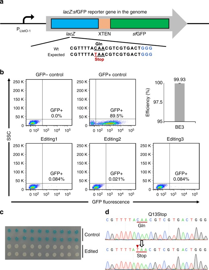 Highly efficient base editing in bacteria using a Cas9-cytidine