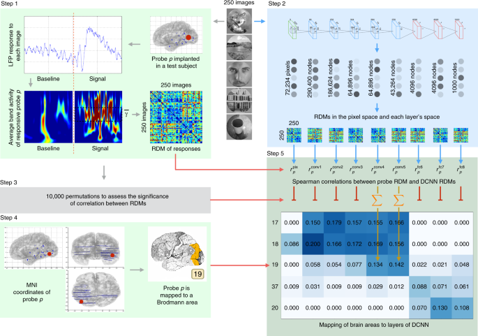 Activations of deep convolutional neural networks are aligned with gam
