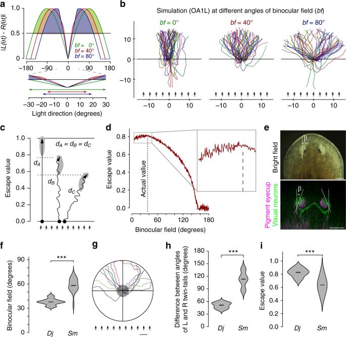 Coordination between binocular field and spontaneous self-motion