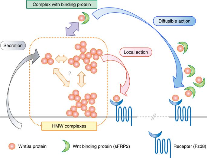wnt sport triple protein