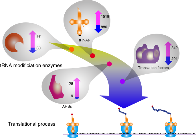 Global analysis of tRNA and translation factor expression