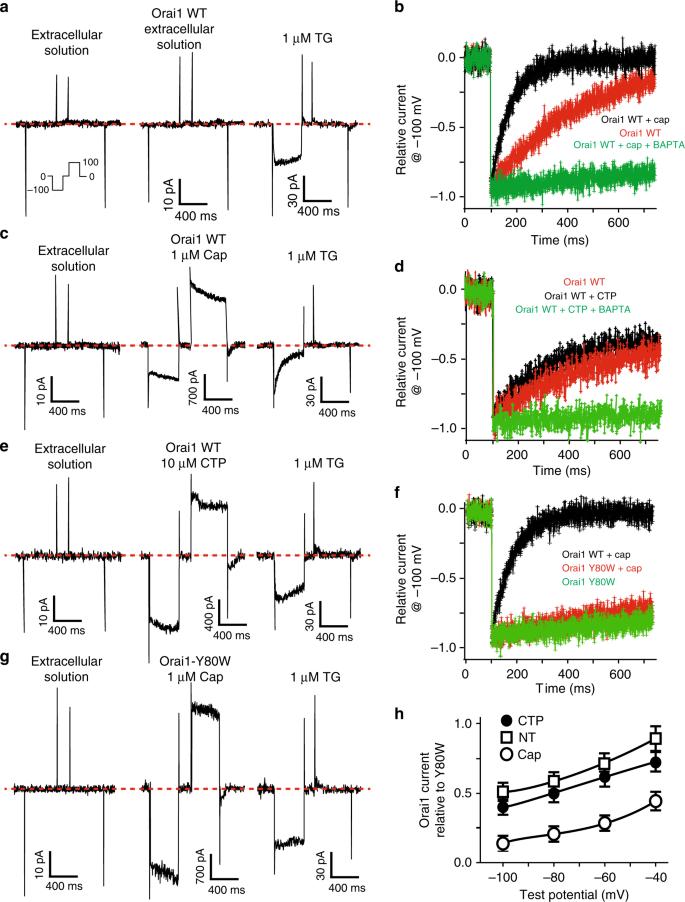 Heterologous calcium-dependent inactivation of Orai1 by neighboring