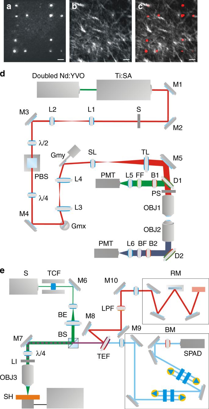 Morpho-mechanics of human collagen superstructures revealed