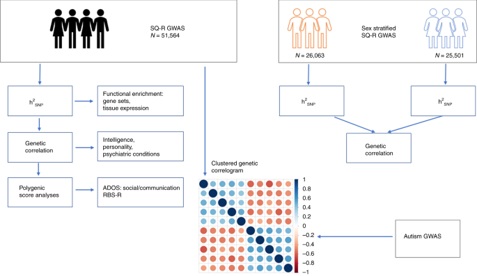 Social and non-social autism symptoms and trait domains are geneticall