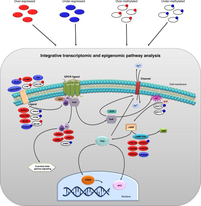 pathCHEMO, a generalizable computational framework uncovers molecular