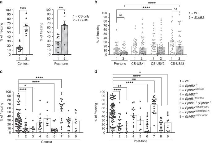 EphB2 receptor cell-autonomous forward signaling mediates auditory mem