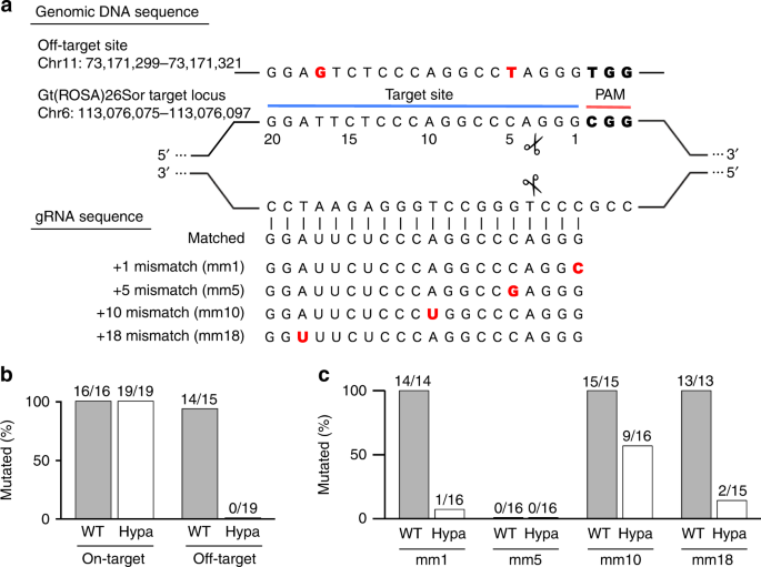 High-fidelity endonuclease variant HypaCas9 facilitates accurate allel