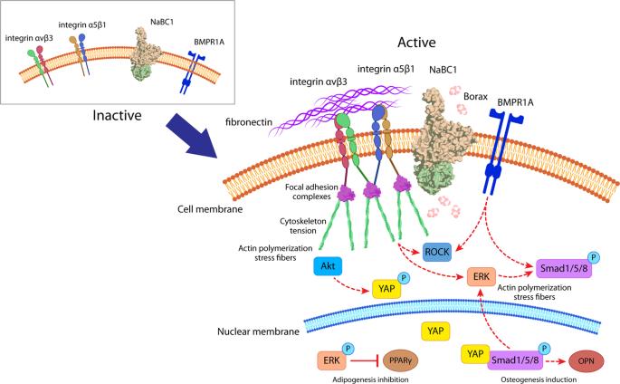 a bőr szemölcsének kriodestruktúrája papilloma tumor nedir