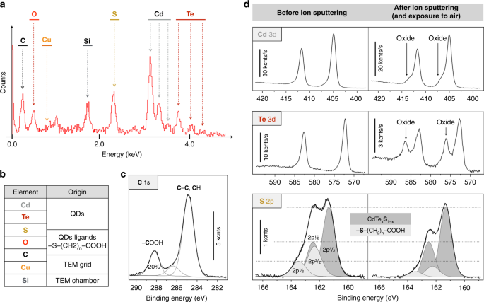 Semiconductor quantum dots reveal dipolar coupling from