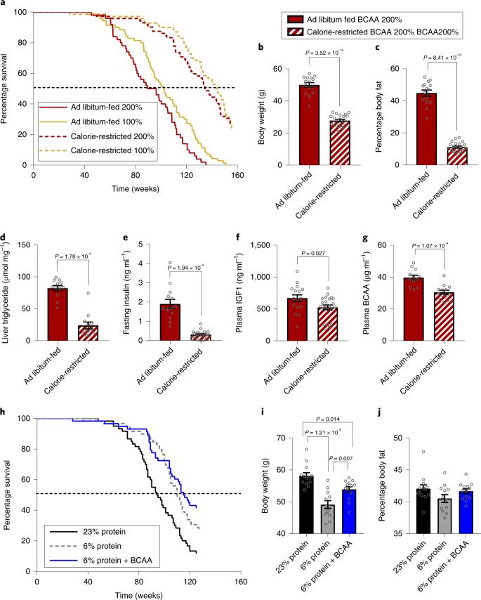 Branched-chain amino acids impact health and lifespan