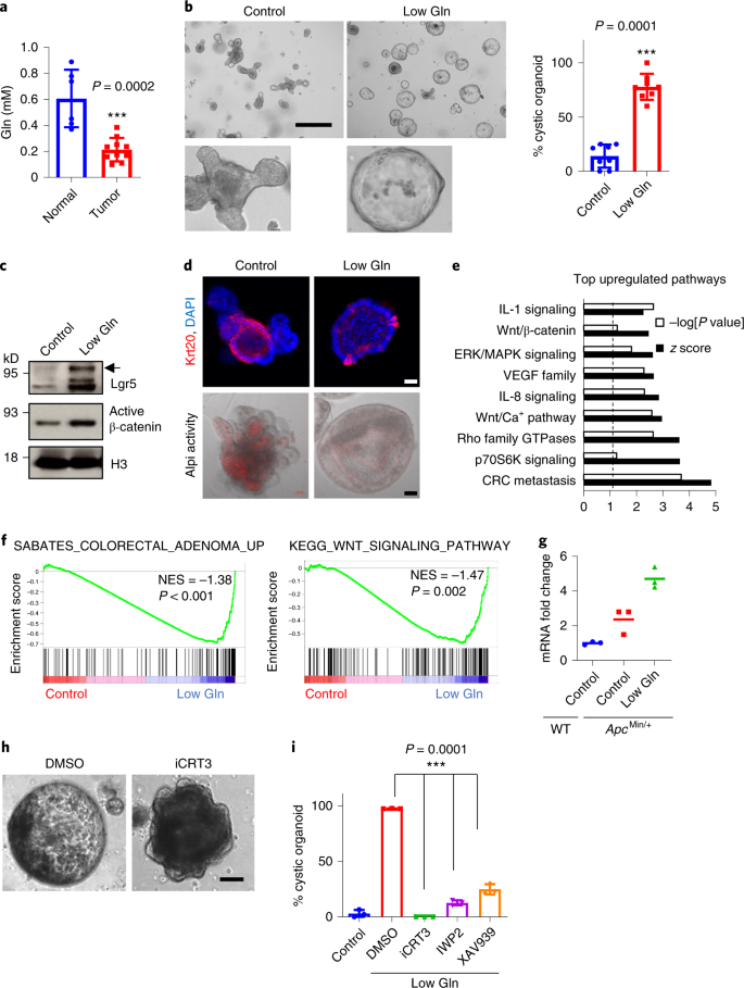 A Ketoglutarate Attenuates Wnt Signaling And Drives Differentiation In Colorectal Cancer Nature Cancer