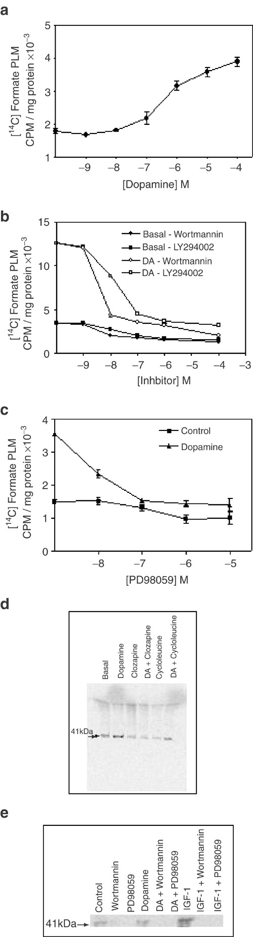 Activation of methionine synthase by insulin-like growth factor-1