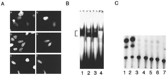 enterobius vermicularis ciklus lábszemölcs fehér