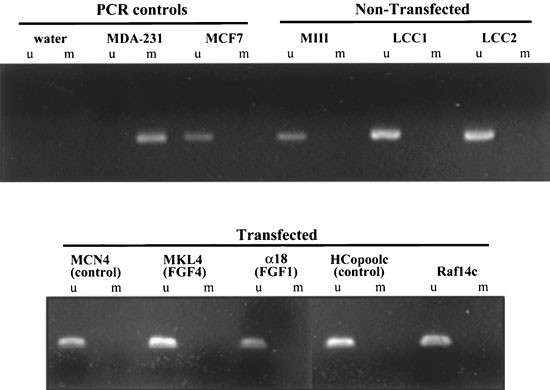Expression of DNA methyl-transferase (DMT) and the cell