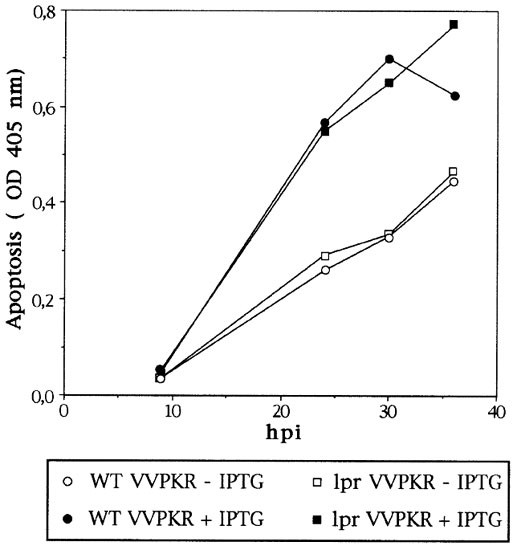 The interferon-induced protein kinase (PKR), triggers