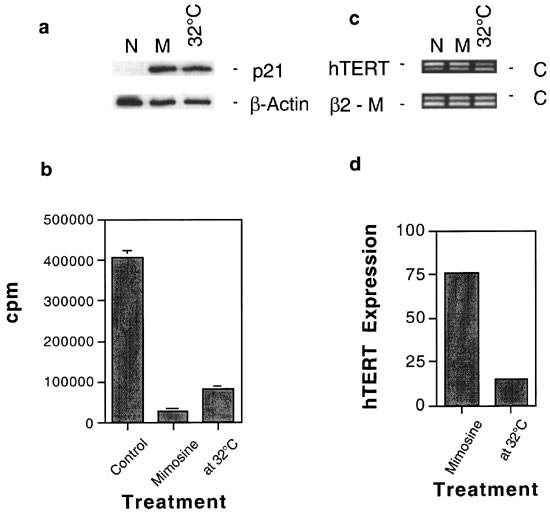 Downregulation of telomerase reverse transcriptase mRNA