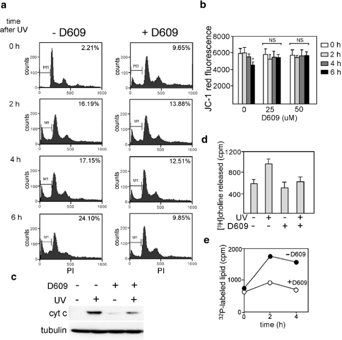 Mitochondrial ceramide increases in UV-irradiated HeLa cells