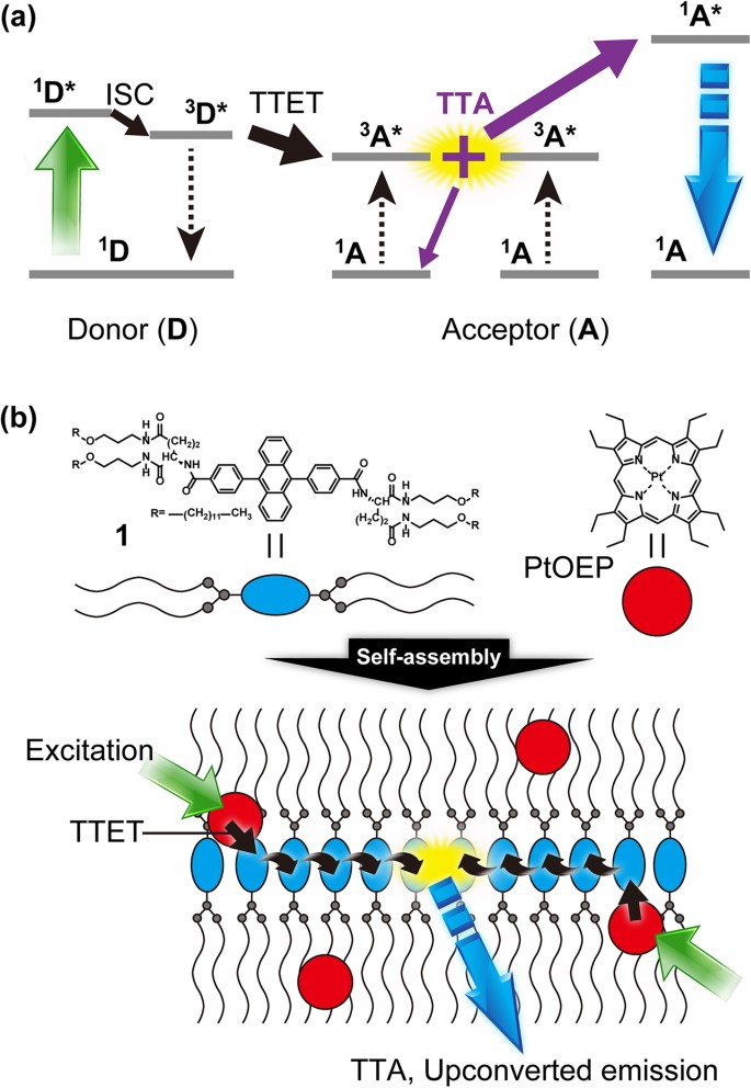 Highly Efficient Photon Upconversion In Self Assembled Light Harvesting Molecular Systems Scientific Reports