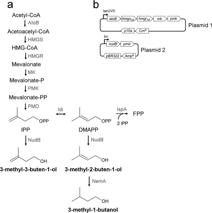 Butol-toxin agyvérzésre