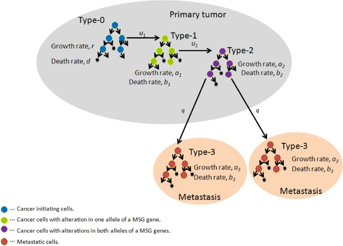 metastatic cancer growth rate)