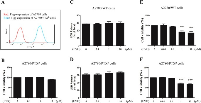 Anti Proliferative Activity And Cell Cycle Arrest Induced By Evodiamine On Paclitaxel Sensitive And Resistant Human Ovarian Cancer Cells Scientific Reports